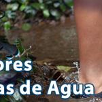 Zapatillas de agua
